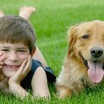 Welche Schäden deckt die Hundeversicherung ab?